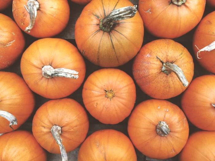 DG_pumpkins